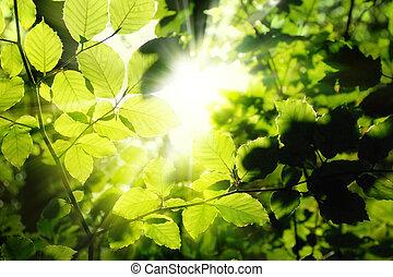 soleil, encadrement, feuillage