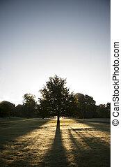 soleil, parc, contre, arbre