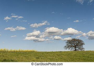 solitaire, arbre, pâturages