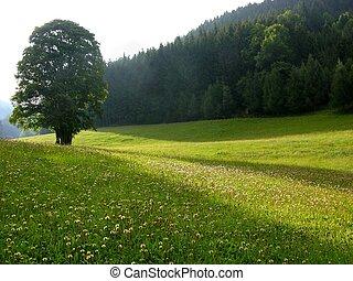 solitaire, arbre, pré, alpin