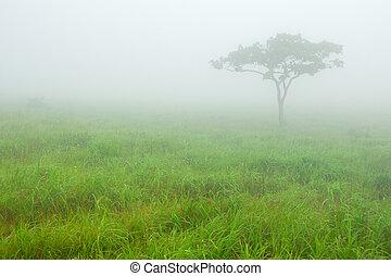 solitaire, brouillard, arbre, pré, matin
