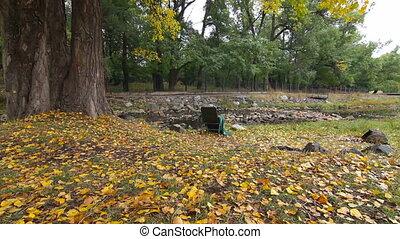 solitaire, chaise, parc, dolly:, automne