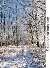 solitaire, gelée, arbres, couvert, sentier, plusieurs