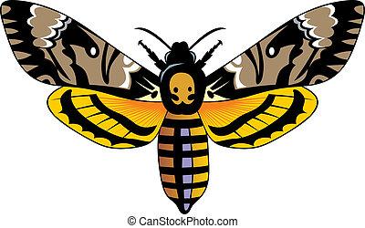 sombre, papillon
