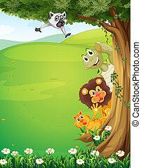 sommet arbre, animaux, collines, dissimulation