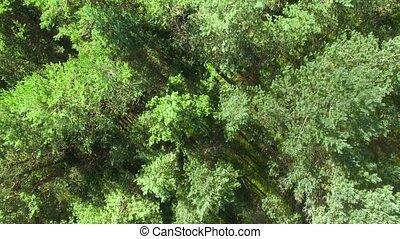 sommet, -, forêt pin, hd, vue