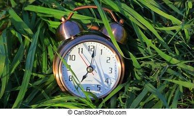 sonner, classique, horloge, reveil, herbe, mensonge