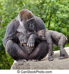 soucier, gorille, jeune, femme