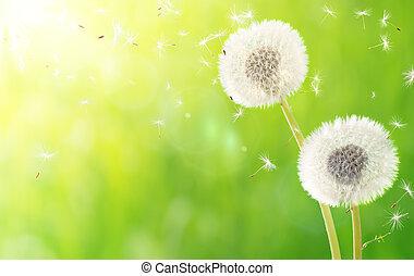 souffle, printemps, allergie, -