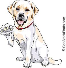 sourires, labrador, patte, chien, gai, vecteur, retriever, donne