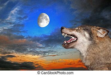 sous, loup, lune