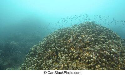 sous-marin, corail, fish, récif, groupé