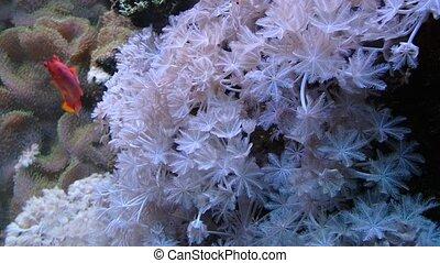 sous-marin, corail, vie, récif