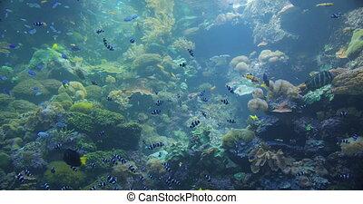 sous-marin, fishes., coloré, mer, exotique
