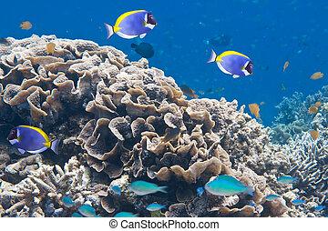 sous-marin, indien, world., ocean.
