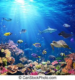 sous-marin, poisson récif, scène, corail, exotique