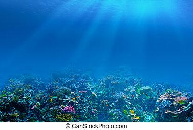 sous-marin, récif corail, fond