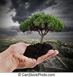 soutenable, forêt, reboisement