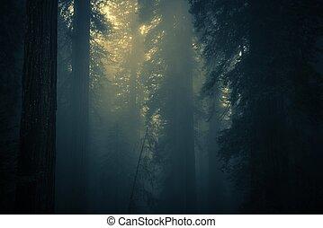 spooky, brouillard, forêt dense