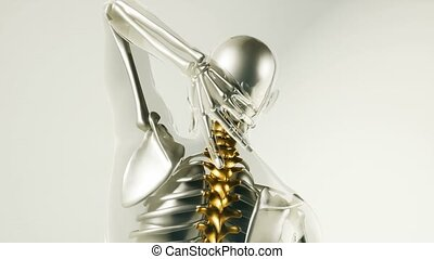 squelette, dos, humain, os, modèle, organes