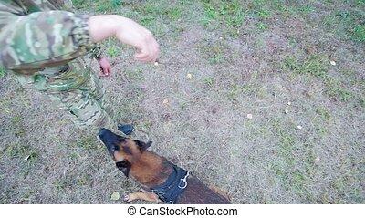 stick., prise, sauts, sheepdog, entraîné