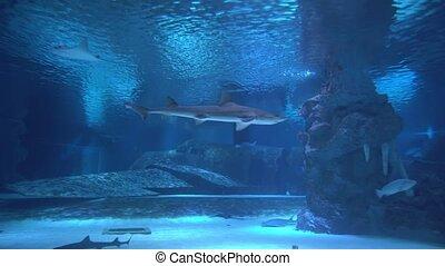 stingrays, sous-marin, mondiale, divers, avion, requins, fish, sunken