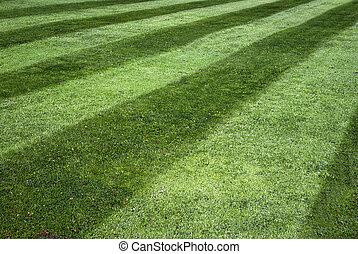 stripy, pelouse