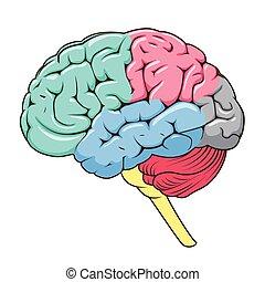 structure, cerveau, vecteur, schématique, humain