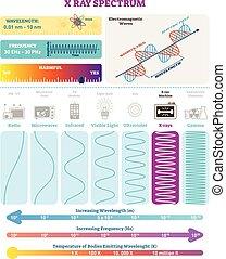 structure., nocivité, spectrum., électromagnétique, waves:, illustration, vague, diagramme, fréquence, vecteur, rayon x, longueur onde