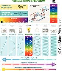 structure., nocivité, spectrum., électromagnétique, waves:, illustration, vague, diagramme, visible, vecteur, fréquence, longueur onde