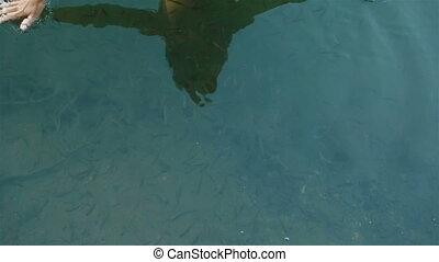 stupéfiant, fish, tout, peau humaine, fin, spa, bleu, peu, harmonie, around., nature, carpathian, eau, moment, mains, poissons, soin, beaucoup, haut, propre, manucuré, montagnes., natation