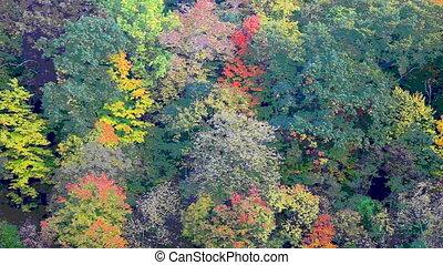 style, peinture, forêt, coloré