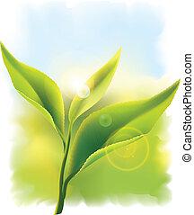 sun., feuilles, frais, thé, vecteur, vert, illustration., rayons