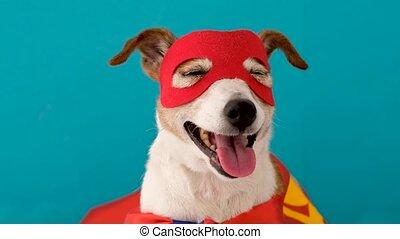 superhero, rigolote, déguisement, chien