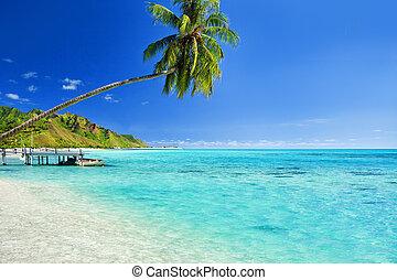 sur, arbre, jetée, paume, lagune, pendre