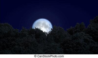 sur, lever lune, forêt, levers de soleil