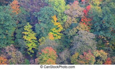 sur, moule, coloré, forêt