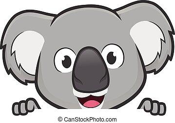 sur, regarder, vide, tenue, panneau signe, koala