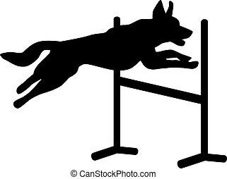sur, sauter, chien, obstacle, agilité