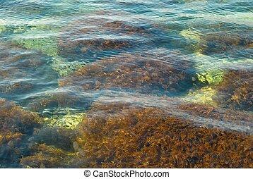 surface eau, driftweed.