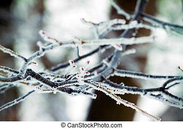 surgelé, arbre diverge