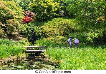 sussex, château, printemps, pendant, britannique, angleterre, coloré, jardin