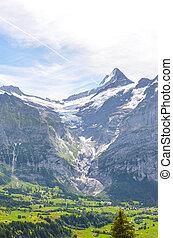 switzerland., alpin, été, forêt, entouré, vallée, au-dessus, bachalpsee, piste, suisse, neige-couvert, montagnes., lake., paysage, mener, alpes, petit, grindelwald, ville, pris