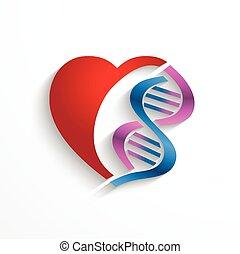 symboles, médecine, concept., génétique, coeur, hélix, double, adn, biologie, concept