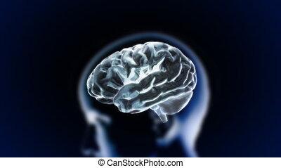 tête, cerveau, lueur, section, couleur