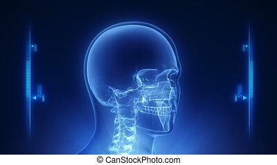 tête, humain, rayon x, balayage