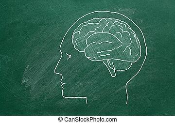 tête humaine, brain.