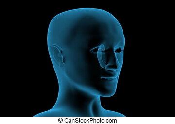 tête, transparent, humain, 3d