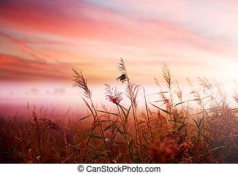 tôt, brumeux, brume, paysage., matin