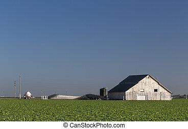 tôt, lumière, blanc, grange, matin